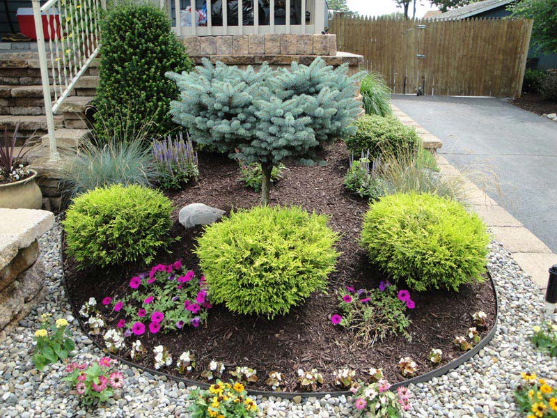 Best-Landscaping-Shrubs