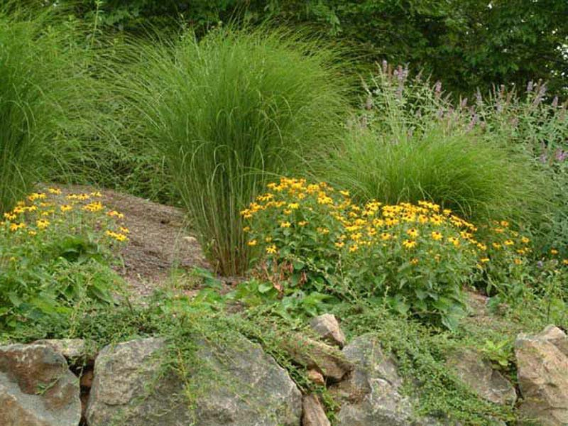 Cheap-Hillside-Landscaping
