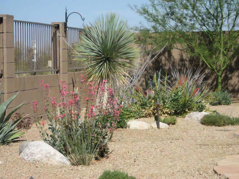 Desert-Landscape-Design-Education