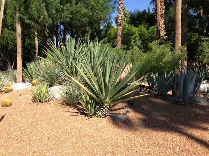 Desert-Landscape-Design-Questionnaire