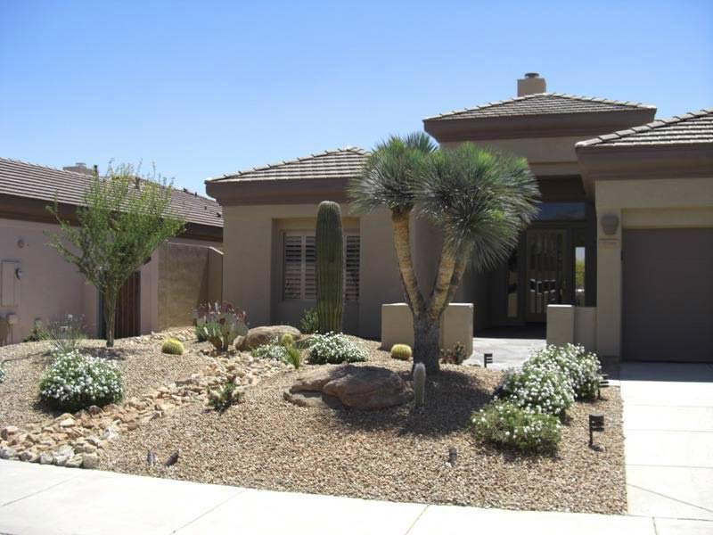 Desert-Landscaping-Front-Yard