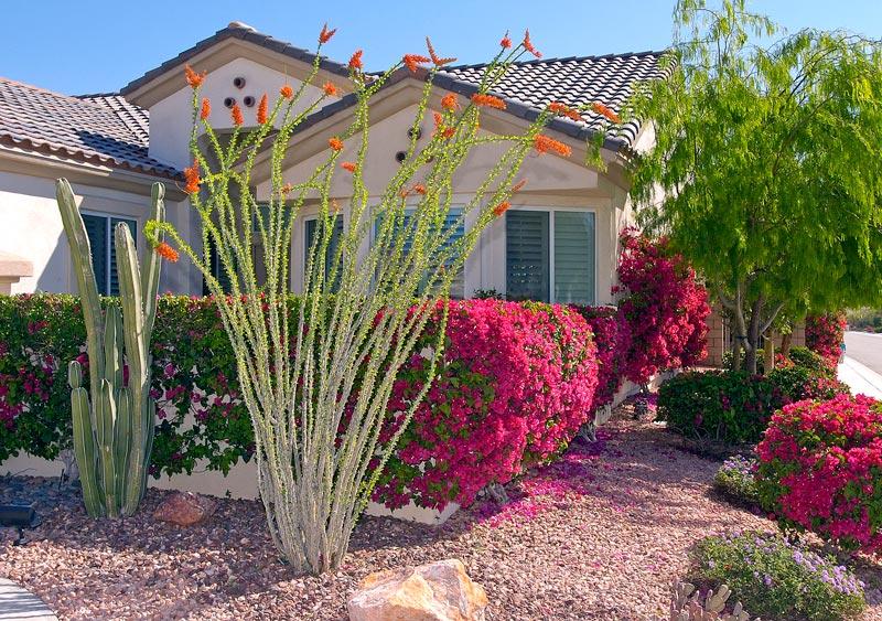 desert landscaping plants landscape design