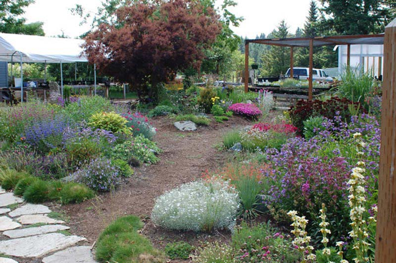 Drought tolerant landscape design job landscape design for Landscape design career