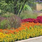 Flower-Beds-Designs
