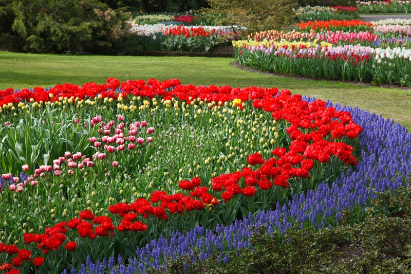 Flower-Garden-Design-Software