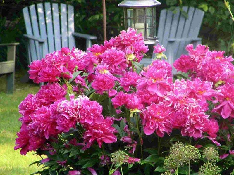 Flower-Garden-Planner-Free