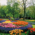 Flower-Garden-Plans-Layout