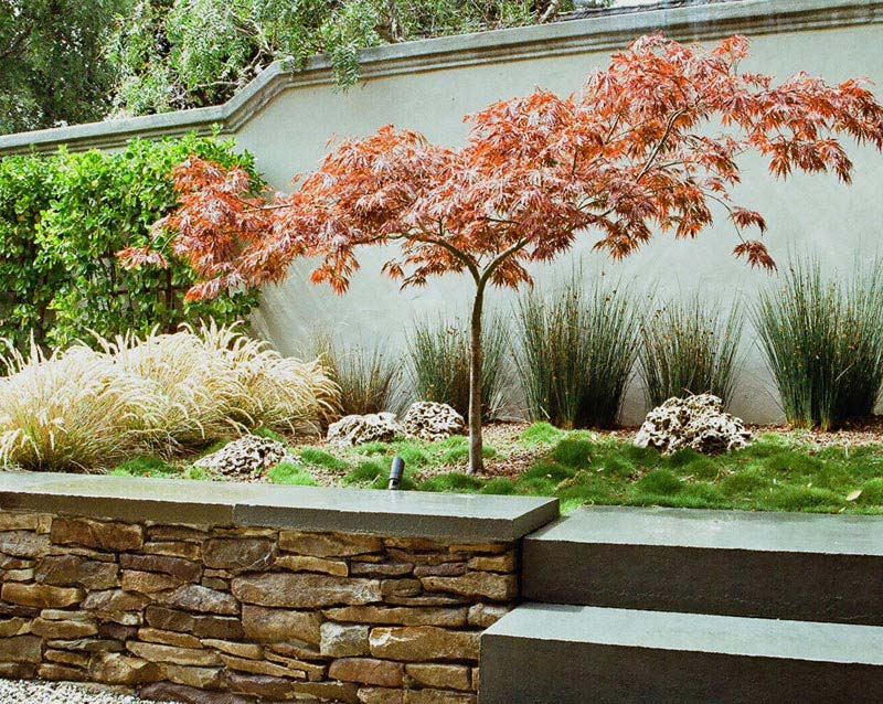 Garden design with japanese maple landscape design for Garden design with japanese maple