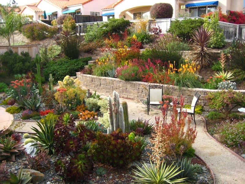 Hillside-Landscaping-Petaluma