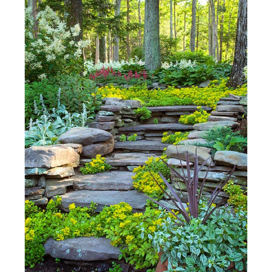 Tips to choose best hillside landscaping packages for Outdoor design reno