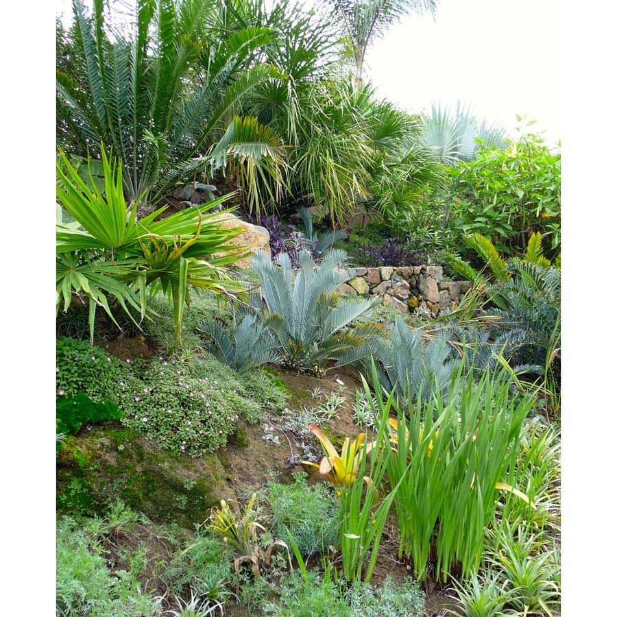 Hillside-Landscaping-Southern-California