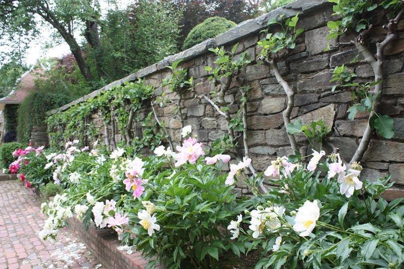 Landscape-Design-Plans-Rustic-Garden