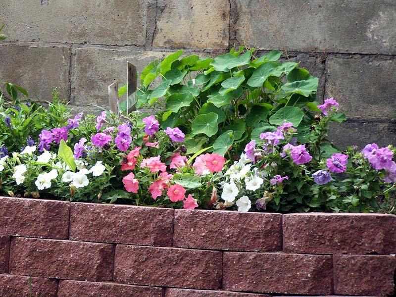 Landscape-Edging-Brick