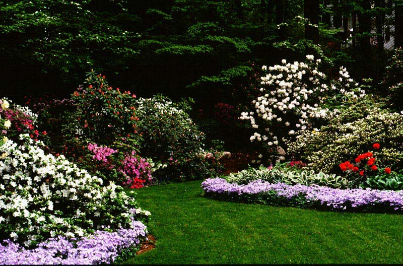 Landscaping-Shrubs-For-Full-Sun