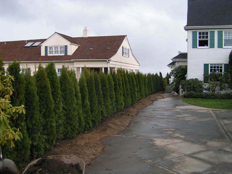 Landscaping-Shrubs-For-Privacy