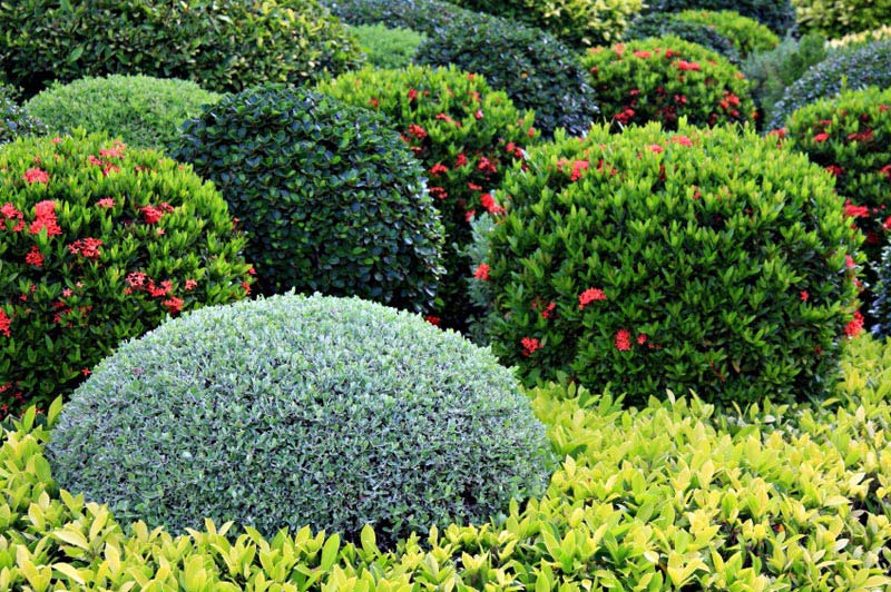 Low-Maintenance-Landscaping-Shrubs