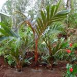 Low-Maintenance-Tropical-Garden