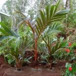 Low-Maintenance-Tropical-Garden