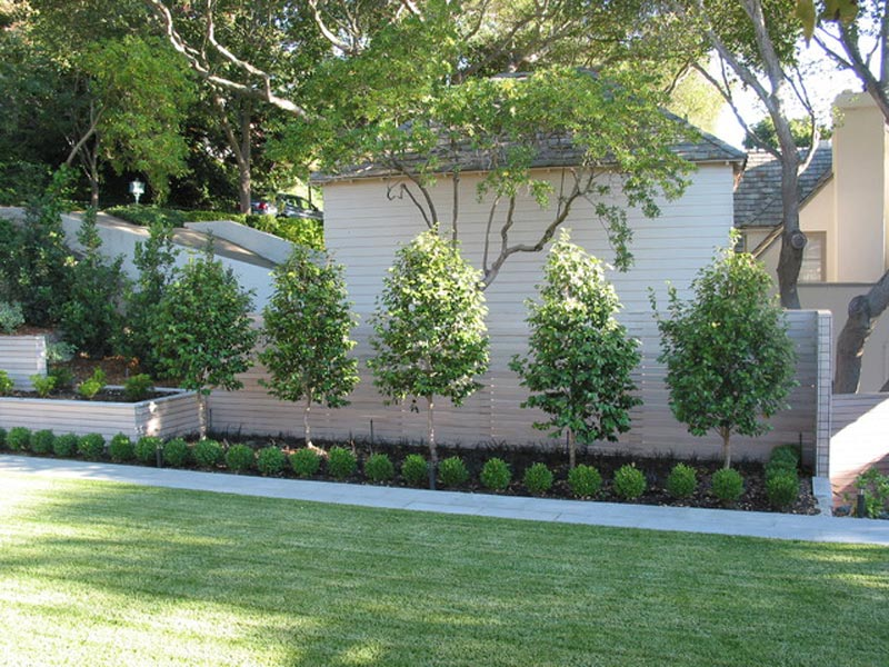 Modern-Landscaping-Shrubs
