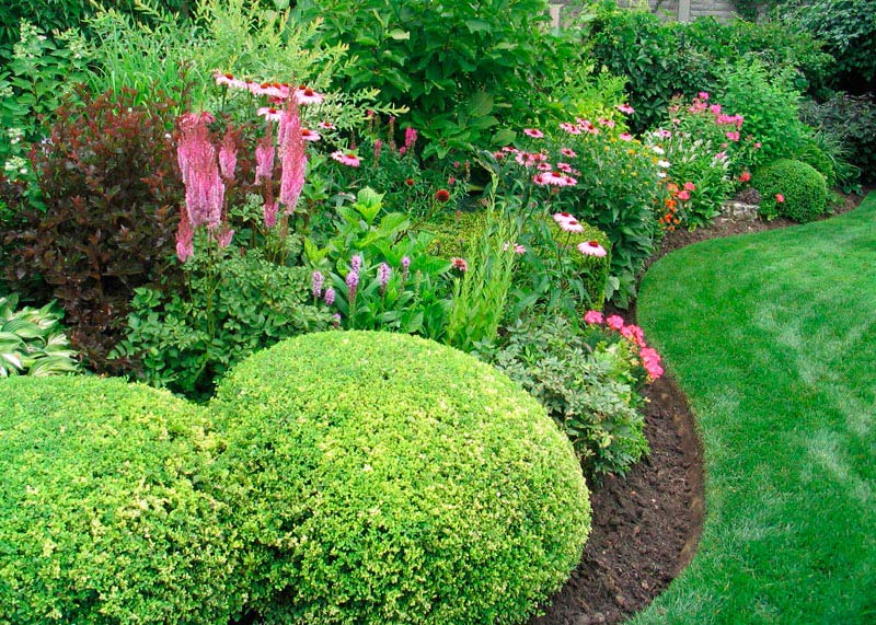 Top-Shrubs-Landscaping