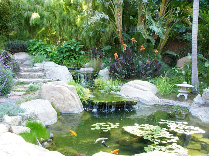 Tropical-Fish-Tank-Landscaping