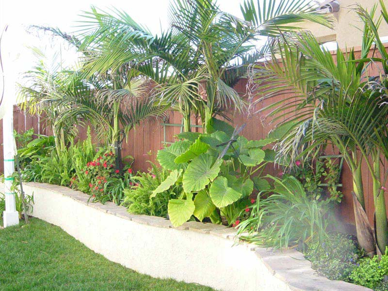 Tropical-Front-Yard-Landscaping-Pictures