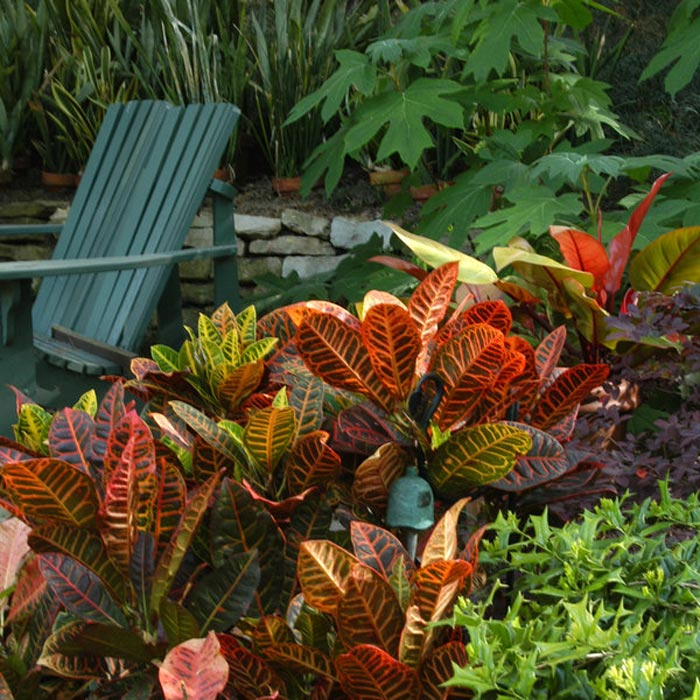 Tropical-Landscaping-Plants