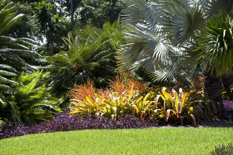 Tropical-Landscaping