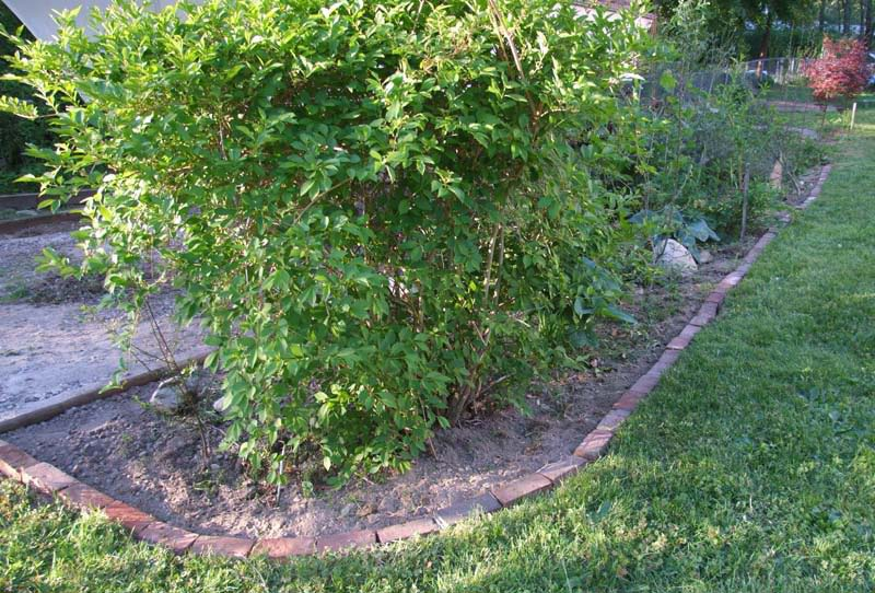 Lawn-Edging-Ideas