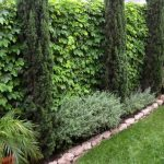 Side-Yard-Privacy-Landscaping