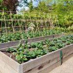 Mulch-In-Vegetable-Garden