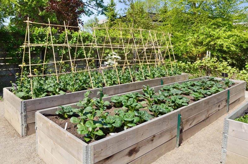 Mulch-In-Vegetable-Garden