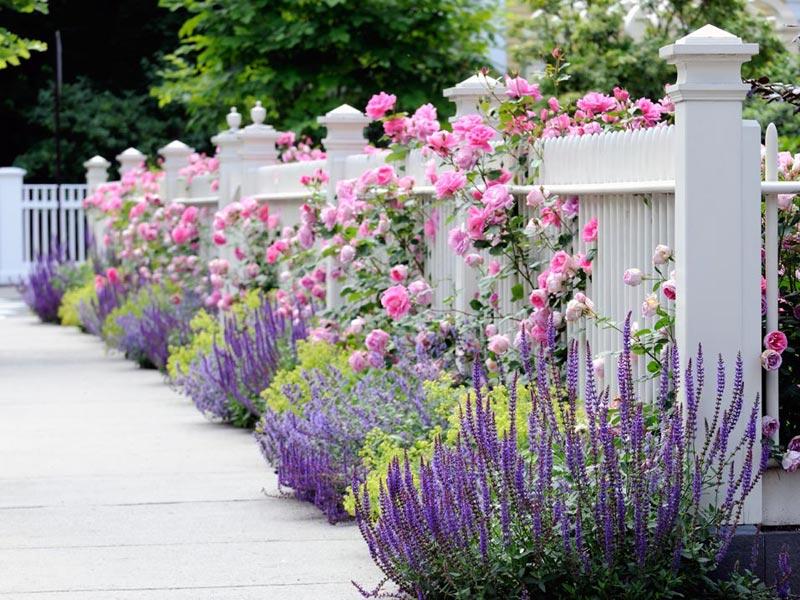 Flower Garden Fence Designs