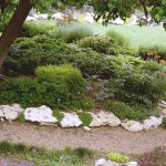 low-maintenance-landscaping-plants-and-shrubs