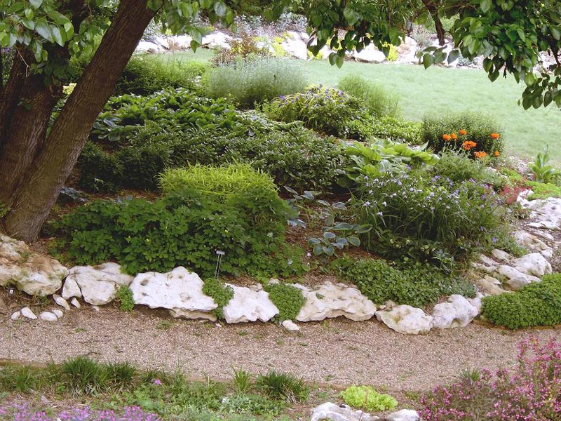 Low maintenance landscaping florida landscape design for Low maintenance plants shrubs