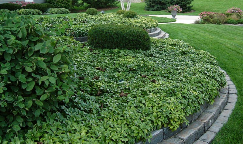 low-maintenance-landscaping-plants