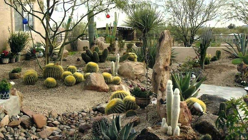 Desert-landscaping