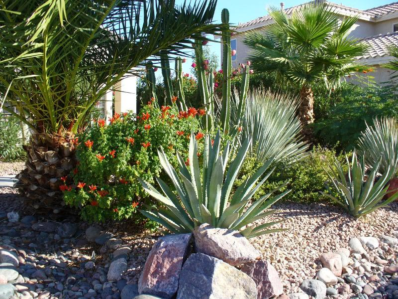 Desert Landscaping: How To Create Fantastic Desert Garden ...