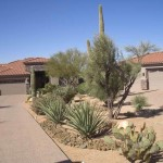 desert-landscaping-photos