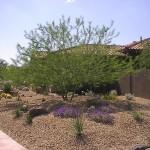 desert-landscaping-plans