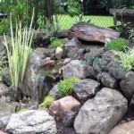 Prevailing-desert-landscaping-ideas-for-front-yard